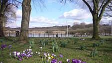 The Moor - Mere and Crocuses